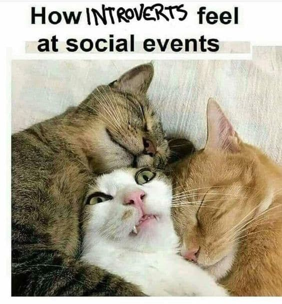 introvert meme cats how feel at social events