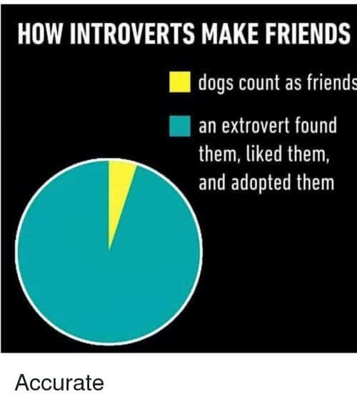 introvert meme how introverts make friends